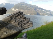 More Suisse (interlaken) 304
