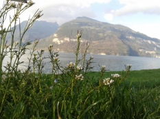 More Suisse (interlaken) 306