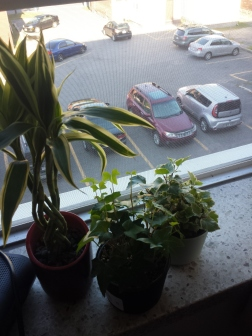 My plants on my window